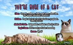 I'm more of a Cat. What about you?null - Quiz