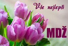 Free Image on Pixabay - Tulips, Early Bloomer, Spring Hd Flower Wallpaper, Purple Flowers Wallpaper, Iphone Wallpaper, Pink Tulips, Tulips Flowers, White Flowers, Free Pictures, Free Images, Tulips Images