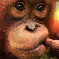 Duhhh, I don no! o_O I just <3 me some monkeys. :-)