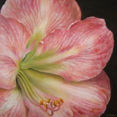 Apple Blossom Amaryllis Botanical Painting, painting by artist JEANNE ILLENYE