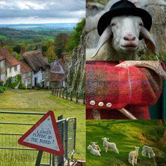 #GreatBritain, #Scottish, #Irish twist Victorian #English tartan cottage fashion love black #manor horse riding hat outside #view #sheep #cottage hat #Tartan #Tweed www.ouwbollig.eu
