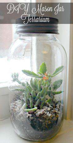 One mason jar, a handful of potting soil and some small houseplants make a diy mason jar terrarium to brighten your windowsill all winter long.