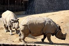 動物園放浪記の画像 エキサイトブログ (blog)