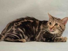 CHATEAU LOST HIS HOME WHEN HIS OWNER WAS EVICTED - NEEDS RESCUE!