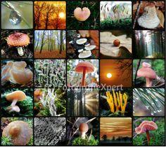 Compilatie Lochem Sallandse Heuvelrug paddenstoelen en prachtige luchten FX 2013