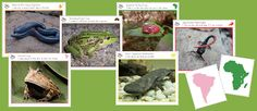 Montessori Amphibians of the World Cards