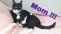 Mom..Please !!!