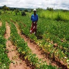 Read about an @OxfamMalawi project funded by the Scottish Government that has reached over 20,000 smallholders #WomenFoodClimate http://rki.lt/1MTGNd9