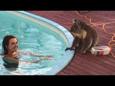 Unforgettable encounter with super cute Koala wanting kisses, cuddles... and water - YouTube