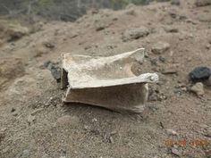 """Resto Óseo en Zona Arqueológica Huaca Penachí. Alguien, me podría ayudar si este hueso es parte de la osamenta de algún """"gentil"""" o de un animal. Espero sus comentarios. Muchísimas gracias."""