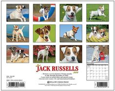 Just Jack Russells 2015 Calendar