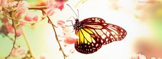 Butterfly on Flower Soft Light Facebook Cover coverlayout.com