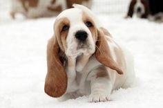 Puppies seeing snow for the first time will warm your cold winter heart - Page 2 of 3