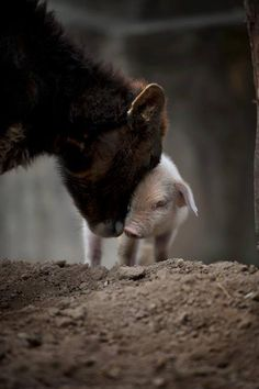 """""""By eating animals we share the responsibility of climate change, the destruction of our forests, and the poisoning of our air and water. The simple act of eliminating meat and dairy will make a difference in the health of our planet.""""  Thich Nhat Hanh"""