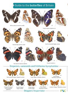The perfect ID guide/chart to British butterflies. This laminated guide is our most popular title - is designed for speedy butterfly identification in the field. Butterfly Identification, Plant Identification, British Birds Identification, Butterfly Images, Butterfly Drawing, Butterfly Illustration, Butterfly Species, Flying Flowers, British Wildlife