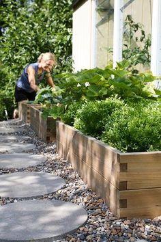 raised garden, (rectangular) pavers among pebbles (or grass)