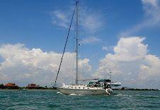 Wildcat Sailorgirl: great sailing blog