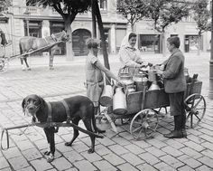 Picture: Milk Vendor Selling from Dog Cart