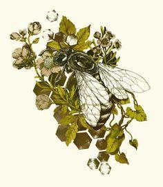 Teagan White - bee