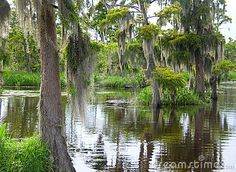 Download Deep In The Louisiana Bayou Swamp Stock Photos for free or as low as $0.20USD. New users enjoy 60% OFF. 22,956,173 high-resolution stock photos and vector illustrations. Image: 15458773