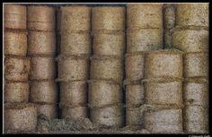 Big rolls by Giancarlo Gallo