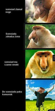 Very Funny Memes, Haha Funny, Funny Lyrics, Polish Memes, Funny Mems, Text Memes, Me Too Meme, Grumpy Cat, Funny Animals