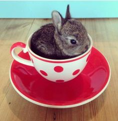 Want some tea honey with a cute bunny.....