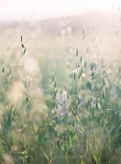 It is spring again. The earth is like a child that knows poems by heart. ~Rainer Maria Rilke