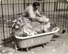 everyone enjoys a claw foot tub scrub