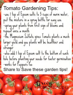 Tomato Gardening Tips: High Yield Tomatoes Using Epsom Salt, DIY Tomato Gardening Tips From Green Homesteading: use 1 tsp of Epsom salts to 5 cups of warm water, put the mixture in a spray bottle f…