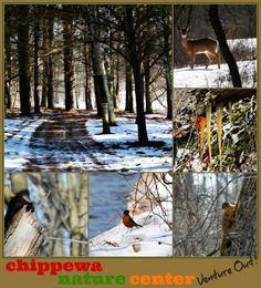 Nature abounds at the Chippewa Nature Center in Midland, MI