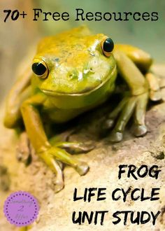 Free Resources for Frog Life Cycle - - Free Resources Frog Life Cycle Unit Study-I start off with free frog life cycle printables then add - Kids Learning Activities, Teaching Science, Science Activities, Life Science, Science And Nature, Science Fun, Science Ideas, Montessori Science, Homeschooling Resources