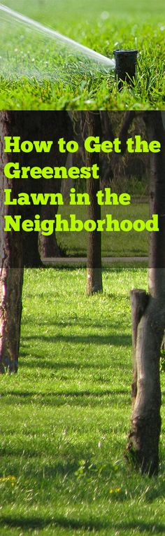 How to Get the Greenest Lawn in the Neighborhood