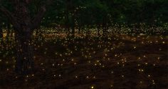 """Fireflies"" by Rabindranath Tagore. photo by Antonio De Stefano Firefly Festival, Dreamy Photography, Kayak Tours, Amazing Pics, Summer Nights, Beautiful World, Simply Beautiful, Beautiful Things, Wonders Of The World"