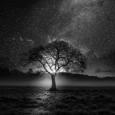 tree silhouette.. by Vassilis Tangoulis on 500px