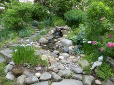 Battling Deer, Shade and More in a New York Garden