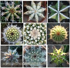 Look what nature can do!  It can make hot picky cactus look like snowflakes!