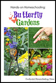 Flutter into a fun DIY hands-on learning opportunity for children by making your own butterfly garden!