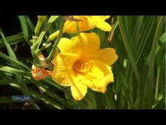 Daveed - Flowers