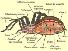:: Only Biology ::. Veterinary Studies, Veterinary Care, Veterinary Medicine, Animal Anatomy, Anatomy Art, Animal Classification, Microscopic Photography, Science Week, All About Animals