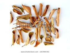 Find Dry Dead Leaves Isolated On White stock images in HD and millions of other royalty-free stock photos, illustrations and vectors in the Shutterstock collection. Thousands of new, high-quality pictures added every day.