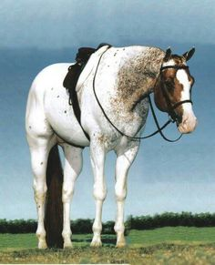 ♥ LOVE this horse!