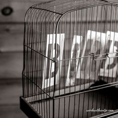free your mind..don`t be the bird in the cage... Let us grow together @workwithantje 📲 http://www.workwithantje.com/7steps