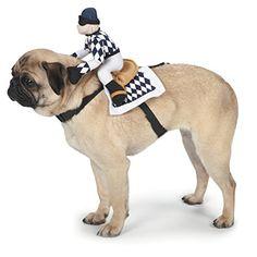 Zack & Zoey Show Jockey Saddle Dog Costume, Medium Zack & Zoey http://www.amazon.com/dp/B00KR27EGY/ref=cm_sw_r_pi_dp_VI8-tb0Y9XSZ7