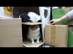 Cat Is Scared To Come Out - #funny #cats