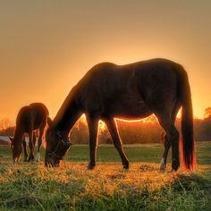 This is horse country. | 13 Reasons Why New Jersey Is The East Coast's Best-Kept Secret