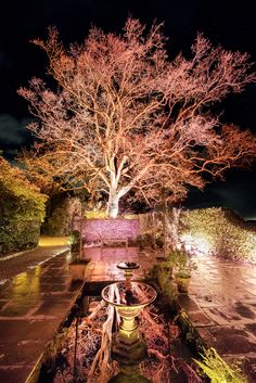 Join us to journey through an after dark Lost Gardens and delight in the night time magic of our historic plantings! #heliganbynight #naturephotography #illumination #horticulture