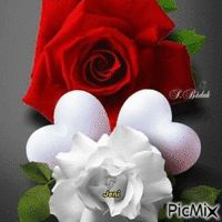 Rose Joelle, Roses, Floral, Flowers, Plants, Florals, Pink, Flora, Rose