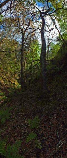 """Subiendo por """"La Riega el Toyu"""". San Roque del Acebal. Concejo de Llanes. Principado de Asturias. Spain.  [By Valentin Enrique]."""