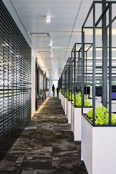 Line the end of your workstations with some biophilic design. Bringing nature into the workplace helps with health and well-being of your staff which could result in productivity and profitability increasing!